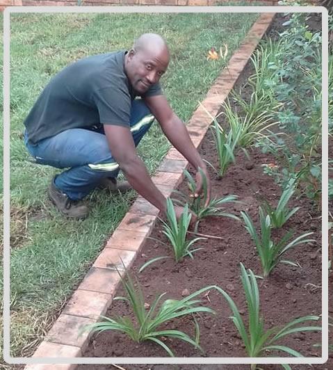 mondiseja-landscaping