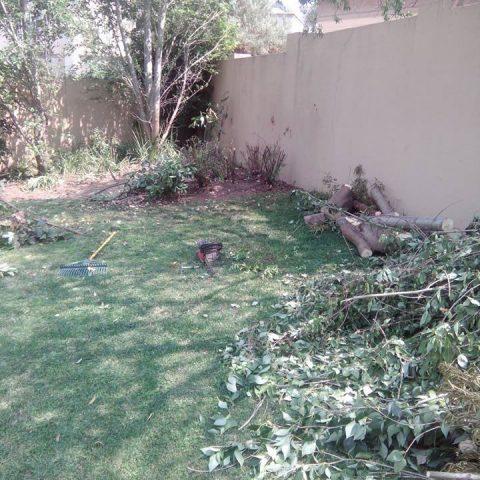 Tree-felling Midrand